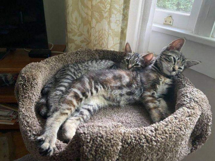 Bella & Gigi 3