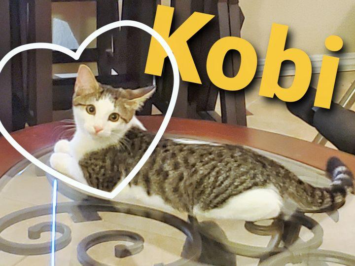 Kobi 2