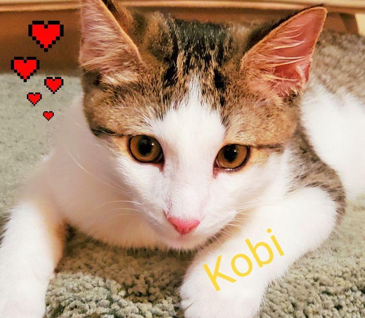 Kobi 4