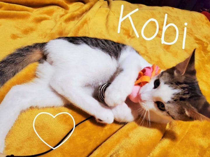 Kobi 6