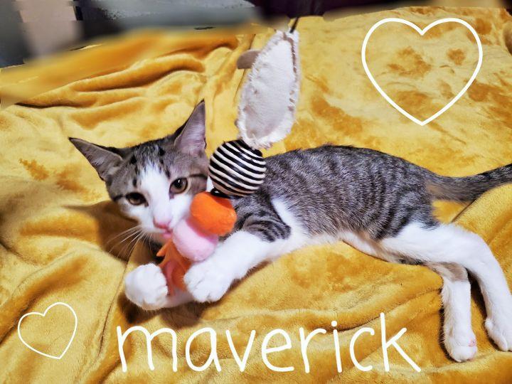 Maverick 5