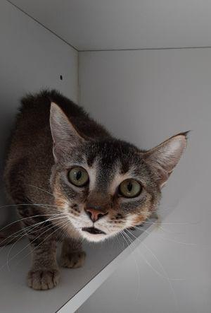 Penelope (Working Cat Program)