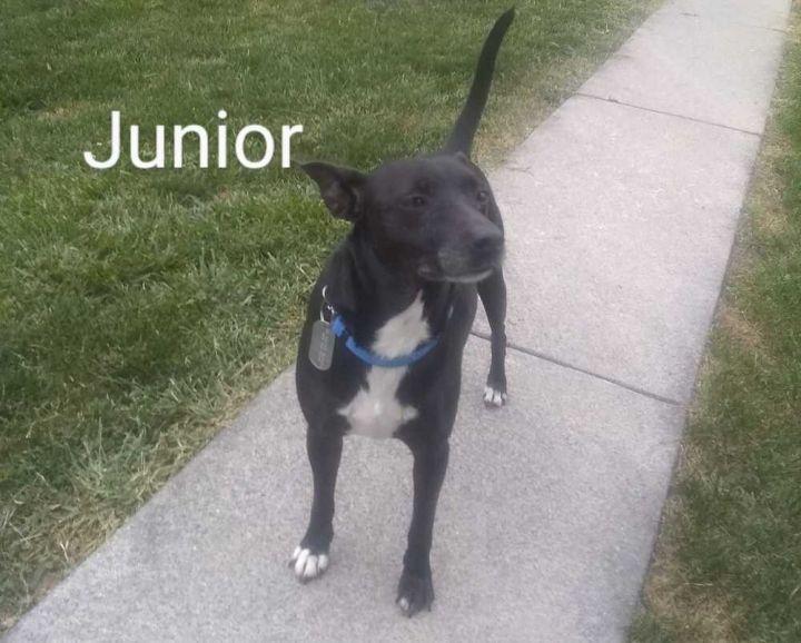 Junior 1