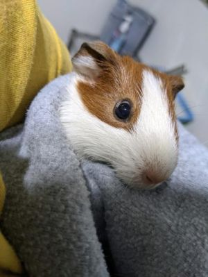 Henrietta is a sweet little one She is a bit more on the shy side but does warm up to