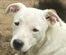 Mary is a seven month-old Terrier mix rescued from Puerto Rico If interested in adopting you must