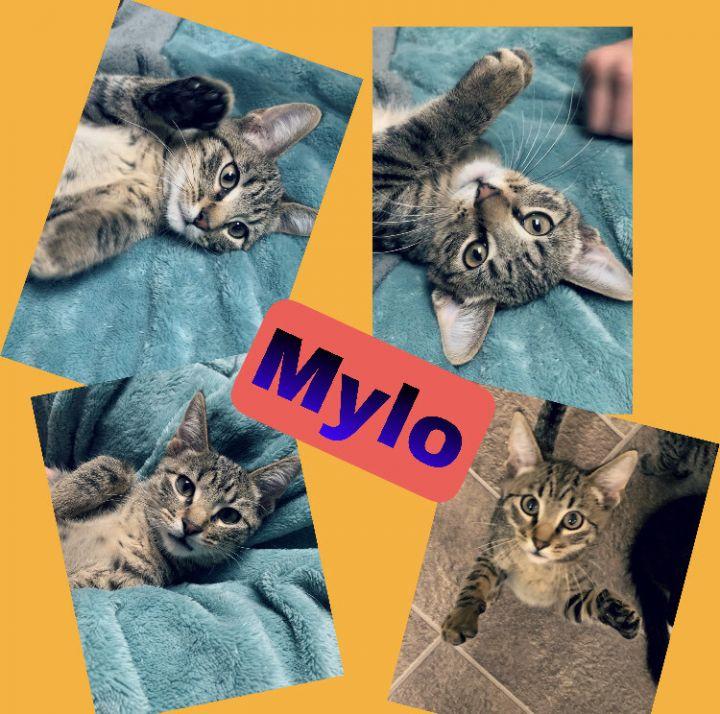 Mylo 1