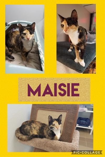 Maisie detail page