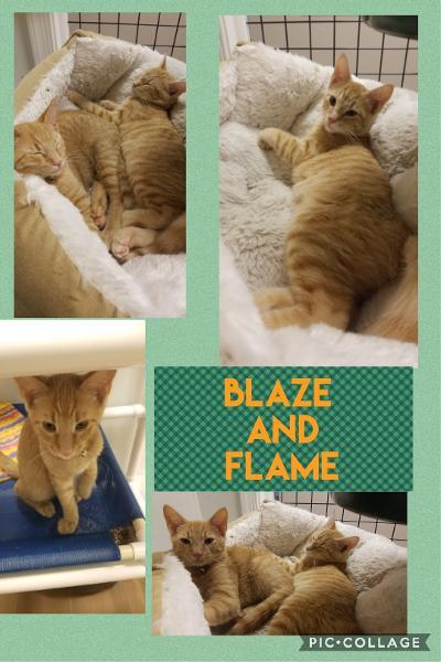 Blaze and Flame 1