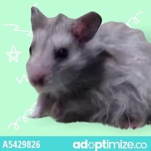 ONION Hamster Small & Furry
