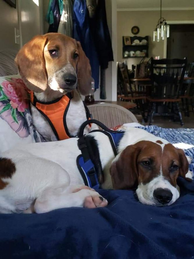 Trooper and Cooper