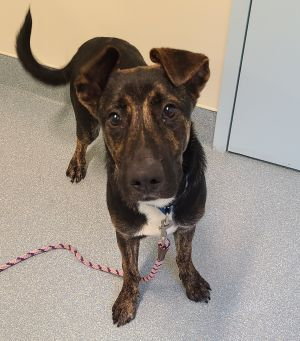 The SPCA is allowing adoptions by appointment only If youd like to discuss an animal andor set up