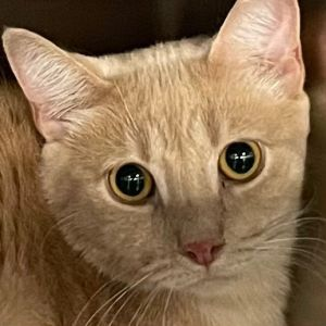 Zen is a sweet slender young man who was rescued as a kitten at the very end of Jamaica Bay