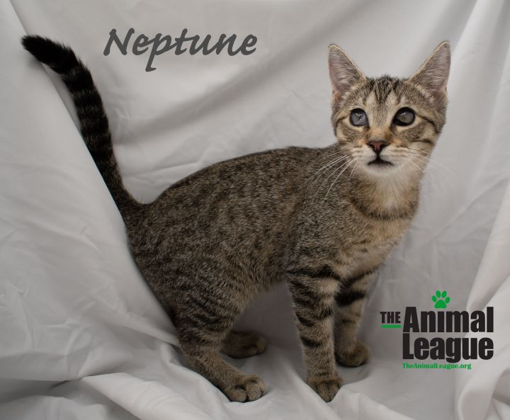 Neptune 2