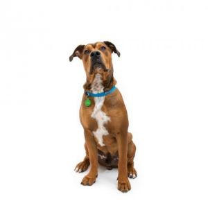 Hi my name is Zeb Im a big energetic dog who is ready to play Im looking for a home