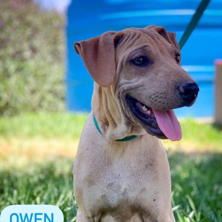 Owen 3