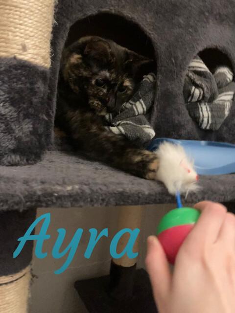 Sansa & Ayra 5