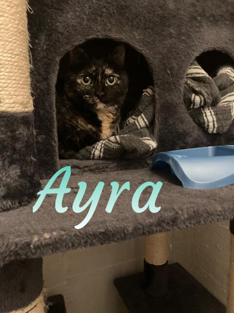Sansa & Ayra 6