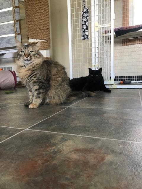 Ebony & Sassy