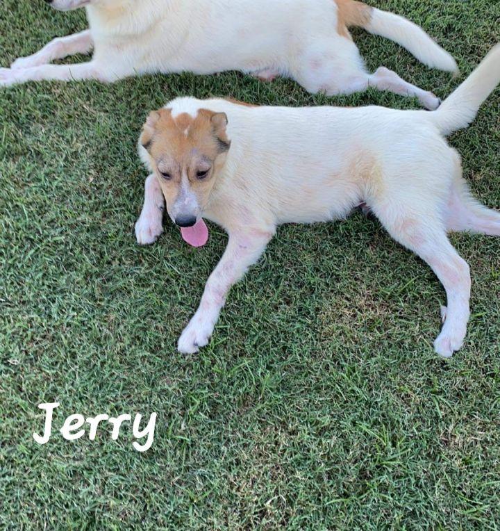 Jerry 5