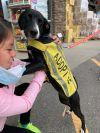 Pita PR Labx Pup