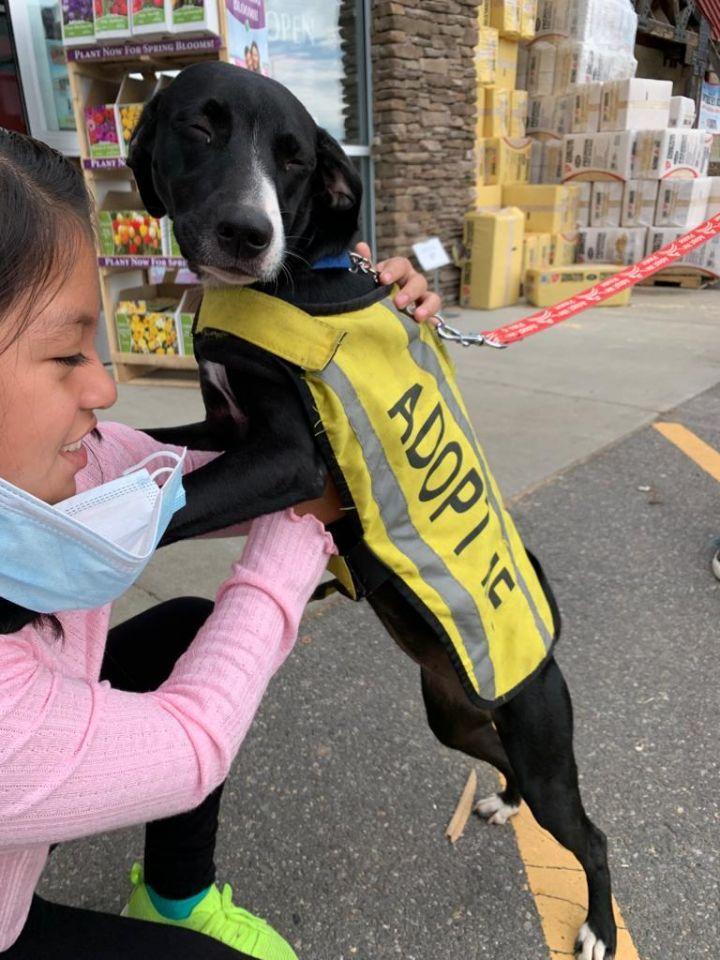 Pita PR Greyhoundx Pup 4