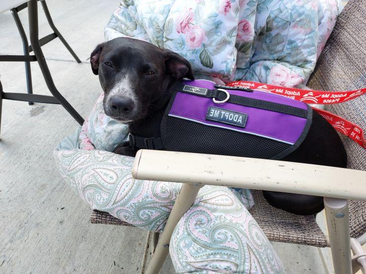 Tuna PR Labx Pup 3
