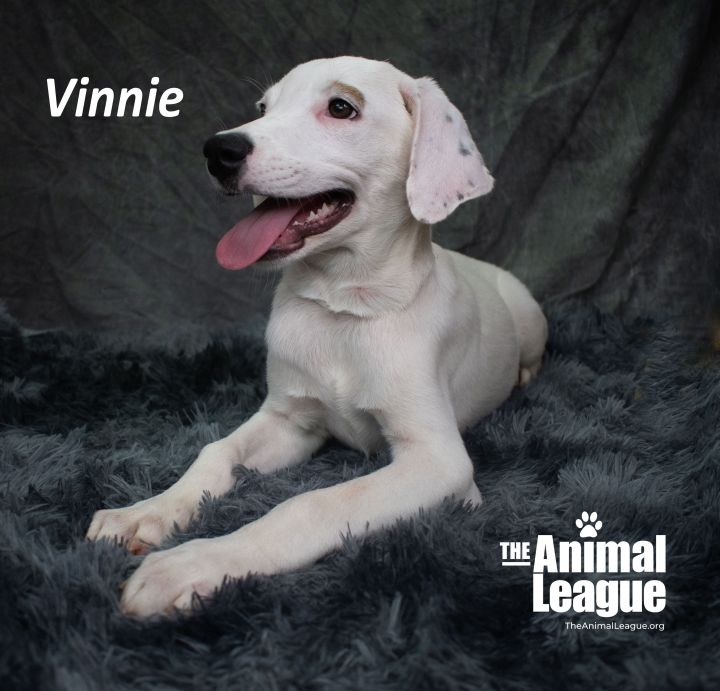 Vinnie 3