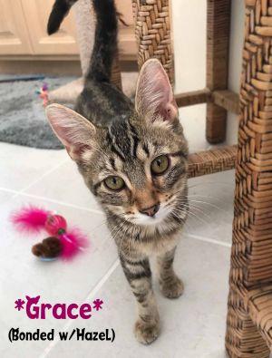 Grace (Bonded w/Hazel)