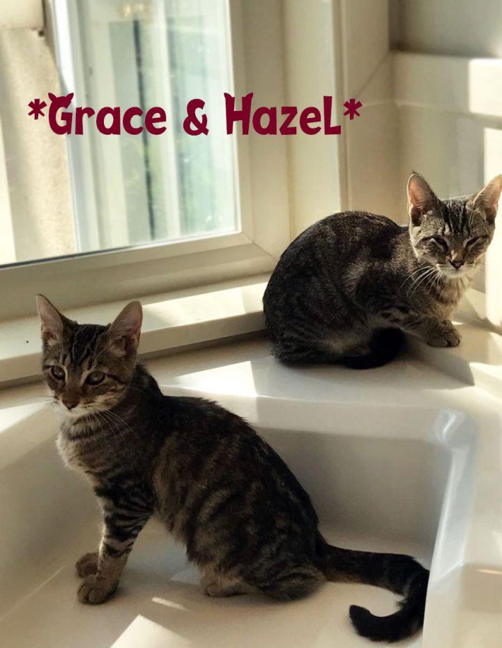 Grace (Bonded w/Hazel) 2