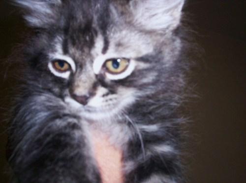 CDHA Kittens