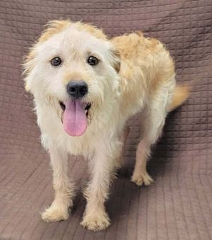 Meet Martel a 1 year old 25 pound wonderful terrier mix He is friendly and gets along with other