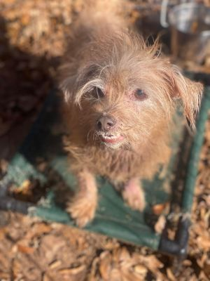 You can fill out an adoption application online on our official websiteAlfie GA is a male scruffy