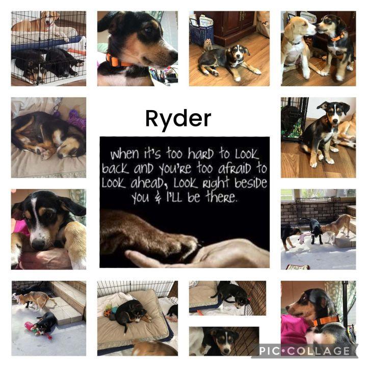 Ryder 2