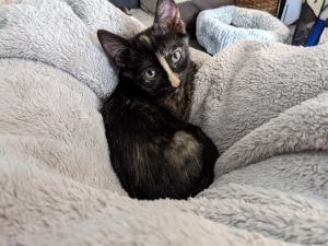 Jasmine is a fun sweet tortie girl whos looking for her forever home Shes ve
