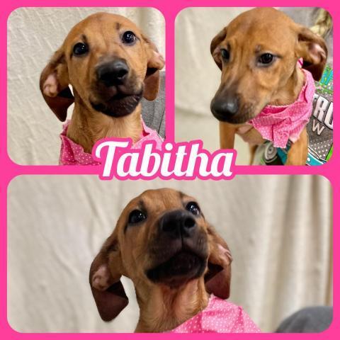 Tabitha 1