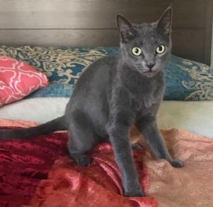 DOB 21421 Charcoal was born on Valentines Day and is a Love Bug She loves family time and child