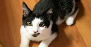 Are you the Rose to our Jack Jack is a loving and playful kitten who can be shy at first