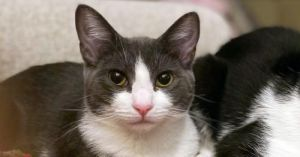Meet Feather Feather is the perfect cats cat She can be very shy around people and feels more com