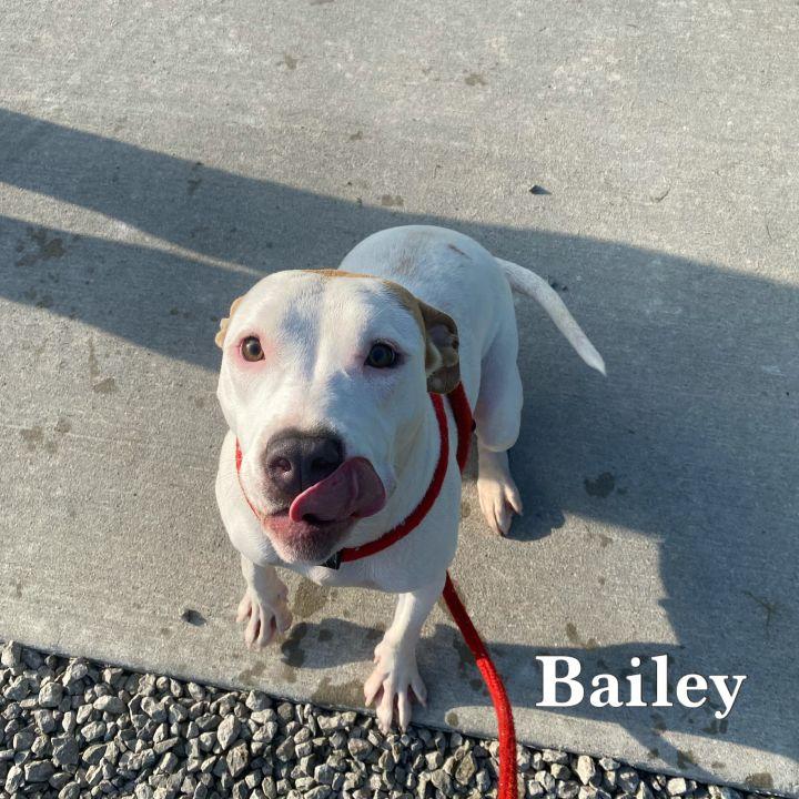 Bailey  2