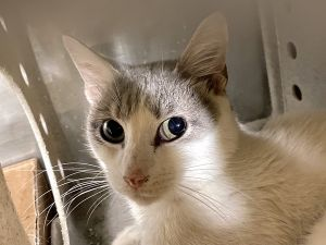 This animal needs emergency placement Please click here to go to our emergency placement page for m