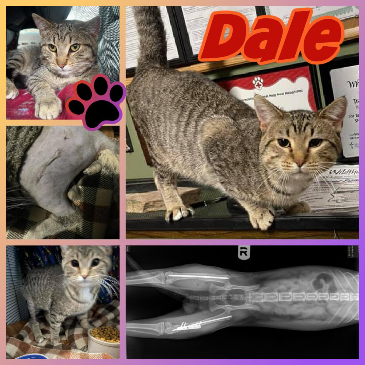 Dale detail page