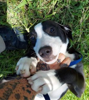 New kid on the block is looking for a forever home This young pup 6 months was rescued from a