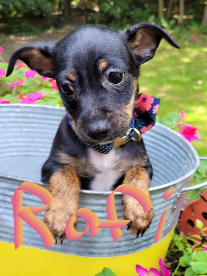 Rafi( 4 lbs of love) 1