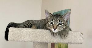 Meet Sage Sage can be shy at first but give him some time to warm up to you and he