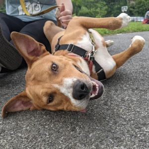 Meet Roger This sweetheart was brought to a Florida shelter as a stray and now gets to play in dogg