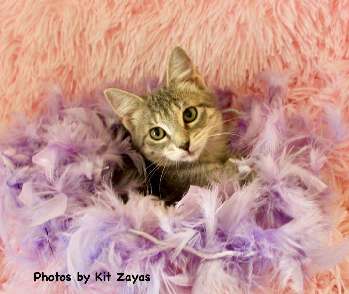 Perky Pinky 3