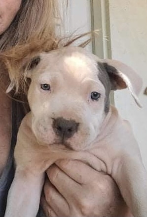 Pitty Pop Puppies  2