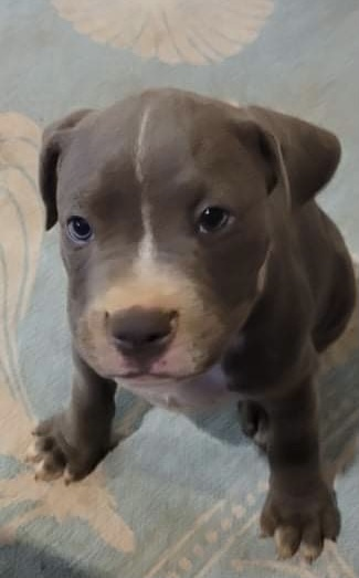 Pitty Pop Puppies  6