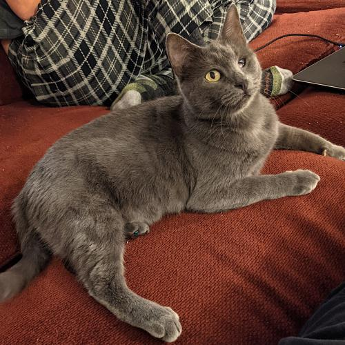 Mrs Meow 2
