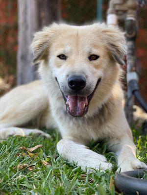 Please see below Meet Eddie Eddie was found by one of our past adopters roaming around his neighb